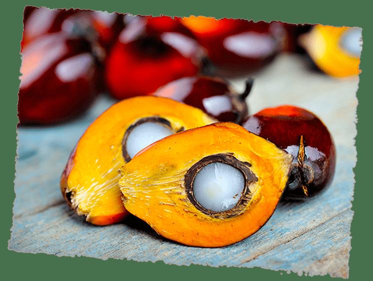 Palmöl aufgeschnitten